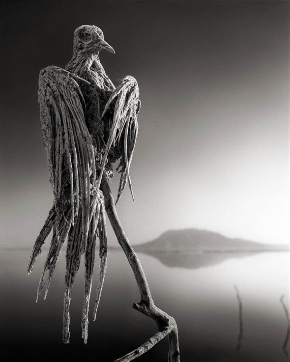 lake-natron-calcium-salt-petrified-animals-nick-brandt-2