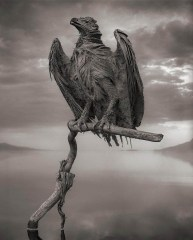 lake-natron-calcium-salt-petrified-animals-nick-brandt-3