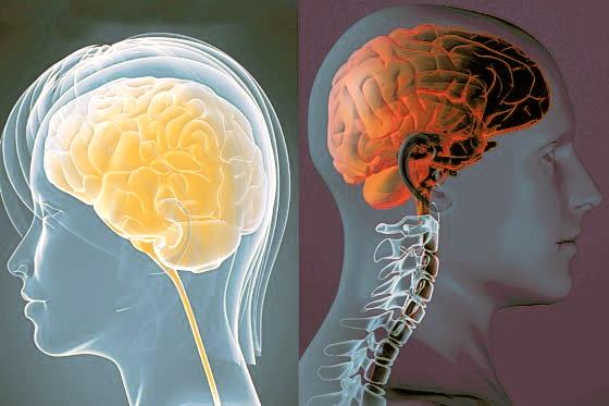 Resultado de imagem para DESPERTANDO O CONHECIMENTO - Sexo estimula neurônios e aumenta inteligência, diz estudo