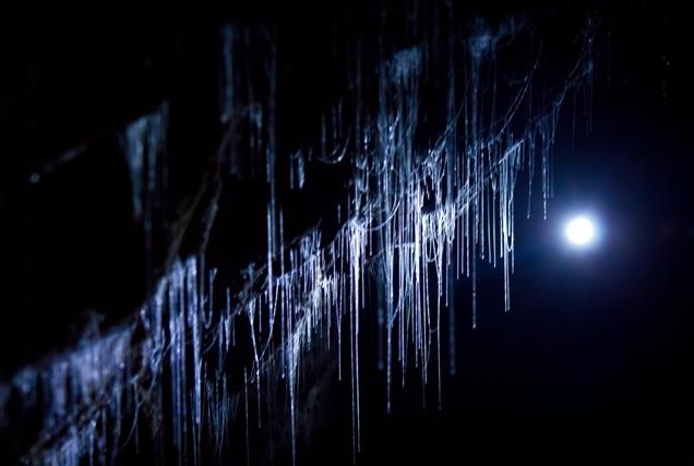 Las luciérnagas en Waitomo Caves- Nueva Zelanda