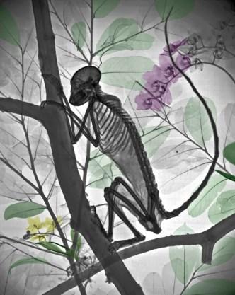 mono rayos x