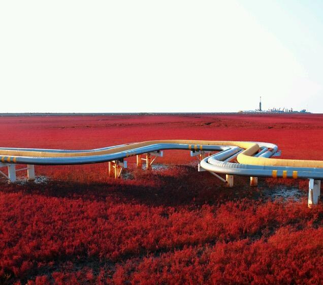 Playa roja ,Panjin, China