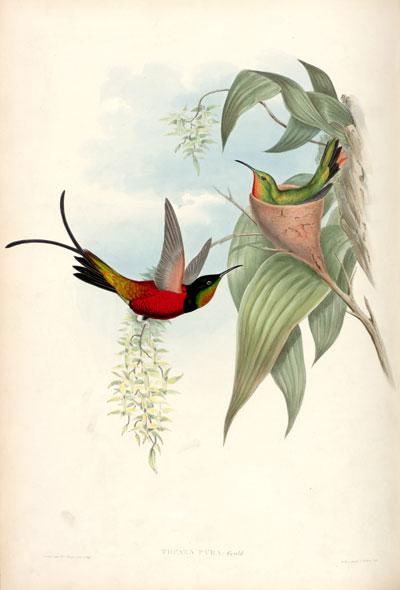 ilustracion cientifica, 4
