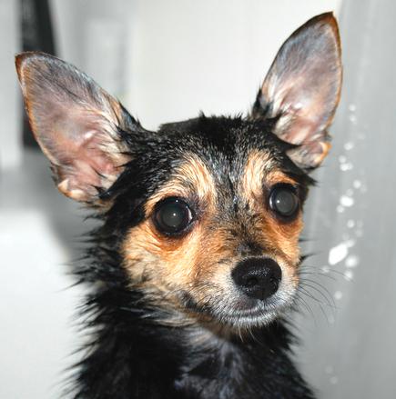 wet-puppy-1386763