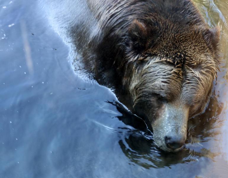 Bear, a bear!