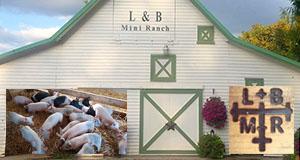 L & B Mini Ranch