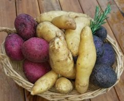 Ode To Joy Farm Potatoes