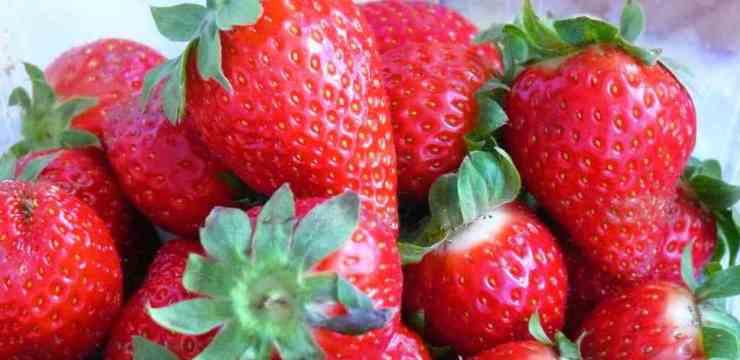 Como preparar fresas