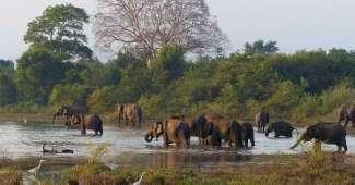 Sri Lanka - Paraíso por recorrer