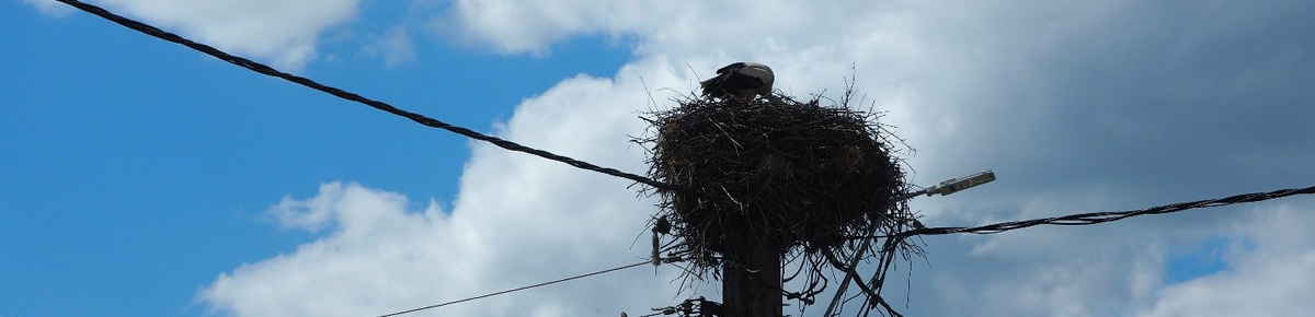 The top of a telegraph pole is visible in the centre of the photograph, silhouetted against a cloudy and blue sky. A stork sits in its nest on top of the telegraph pole