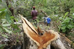'Place forests under local control to increase incomes and sustainability' Deforestation 300x200