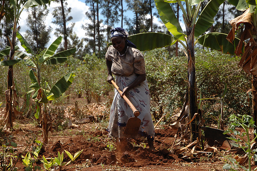 A smallholder female farmer