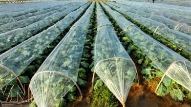 Climate-smart agriculture. Photo: talkvietnam.com
