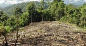 Peru activists murder in spotlight ahead COP 20 Deforestacion