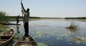 nigeria_allafrica  NCF: Integrate wetlands resource value in Great Green Wall nigeria allafrica