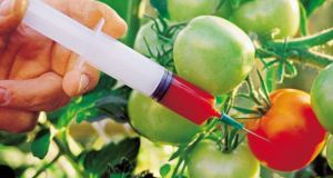 GMO  Why GMOs are not solution to food production GMO