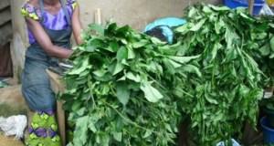 Vegetables-in-Nigeria