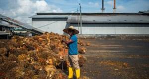 plantation  Groups seek inquiry into modern day slavery on Malaysia plantations plantation e1438237480196