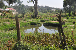 Most Ugandans get their water directly from swamps, streams, gravity flow schemes and springs and wells. Such water may contain worms, protozoa, bacteria and viruses that, if consumed, can cause hepatitis, typhoid, cholera and diarrhea.  How Uganda culture advances water resources Uganda pix