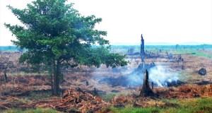 Peatland-Indonesia