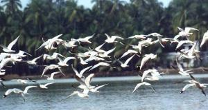 Migratory birds  Spate of illegal bird killing in Egypt unveiled Migratory Birds pong dam