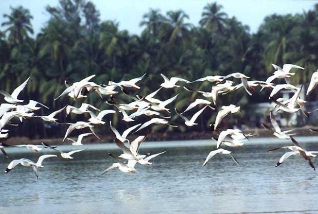 Migratory-Birds  World Migratory Bird Day: Bird conservation crucial to mankind's future Migratory Birds pong dam