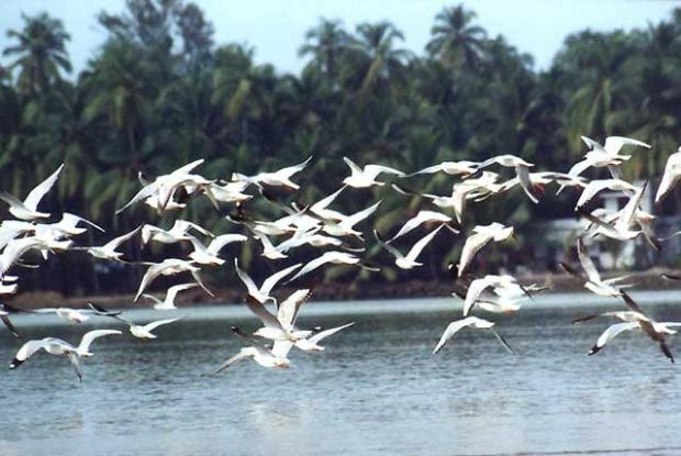 Migratory birds  Group demands end to slaughter of migratory birds Migratory Birds pong dam