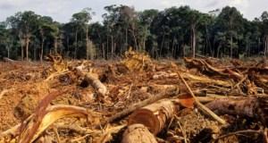 Illegal logging negatively impacting IGR, laments Ogun