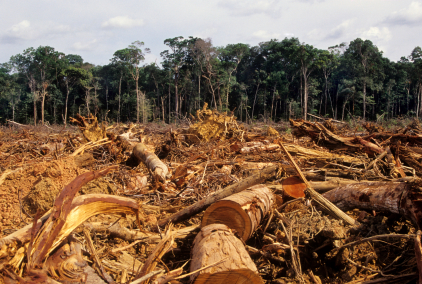 Illegal logging negatively impacting IGR, laments Ogun