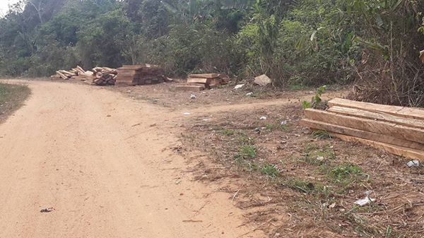 The ineffectiveness of ban on logging in Cross River State is exposed as wanton timber extraction goes on in Boki, close to Boje, the LG headquarter  Photos: Cross River, community in face-off over Super Highway Ekuri3