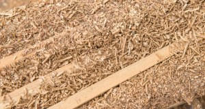 Sawdust  Ogun, ECN, UNIDO to generate power from sawdust Sawdust 14175625352126 e1461551825921