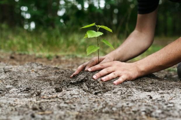 Tree-Planter