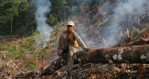 Deforestation in China