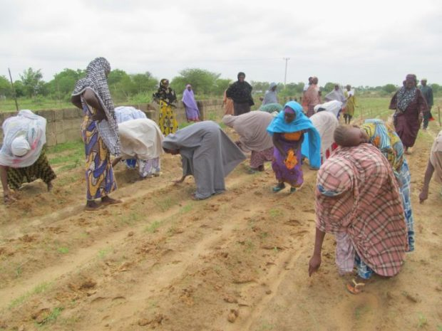 Women  IFAD demands more gender policies to boost women's agric productivity Women e1468278635180