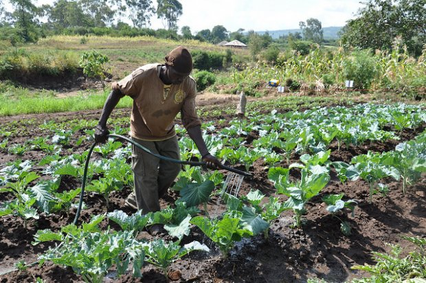 A Kenyan farmer  Farmers demand investment in ecological farming Farmer