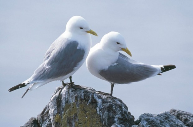Seabirds in the high seas of the North Atlantic