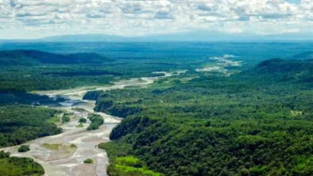 There are fears that continued biodiversity loss would result in an decline in forest productivity