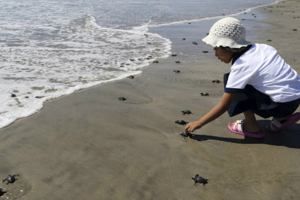 A girl urges a baby turtle towards the ocean at the El Morro Ayuta beach in San Pedro Huamelula, Mexico  Mexico creates nation's largest biological reserves mexico marine reserves