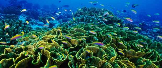 Coral Reefs  World Wetlands Day: Five wetlands that mitigate extreme weather Coral Reef