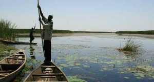 Nguru-Hadejia-Wetlands  NCF leads winter bird census at Hadejia-Nguru wetlands Nguru Hadejia Wetlands
