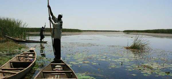 Nguru-Hadejia-Wetlands  World Wetlands Day: How wetlands reduce disaster impact Nguru Hadejia Wetlands