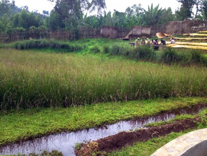 wetlands-in-ethiopia  Ethiopia: Why conservation of wetlands makes sense wetlands in ethiopia