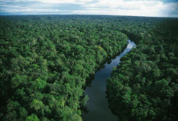 Amazon rainforest  Amazon forest faces climate change threat despite higher rainfall variability amazon rainforest