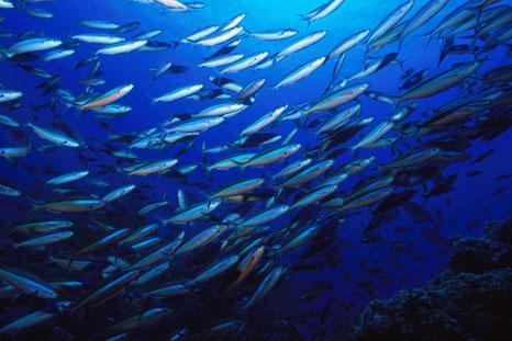 Fish migration