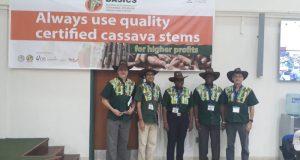 IITA-Cassava