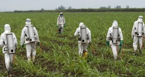 Roundup weed killer  Monsanto weed-killer Roundup causes cancer, says California Roundup e1498579593673