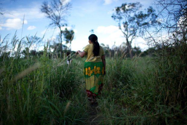 Paraguayan Chaco forest  Paraguayan Chaco forest exploitation threatens endangered species, indigenous peoples Paraguayan Chaco forest e1500565590358