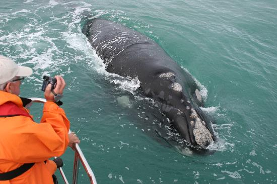 whale-watching  CMS COP12 to offer guidelines for boat-based wildlife watching boat based whale watching