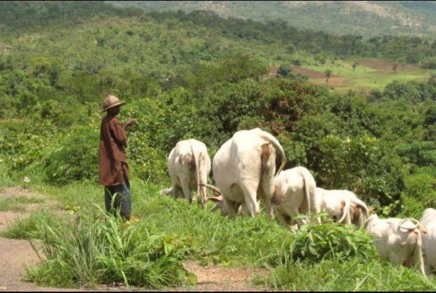 Open grazing