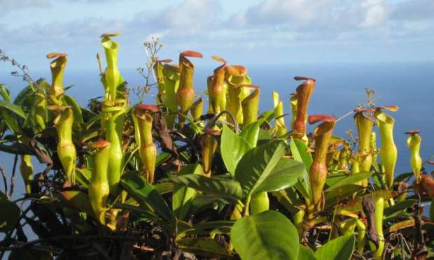 Invasive plant species